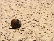 烂掉的椰子在阳光下 免版税库存照片