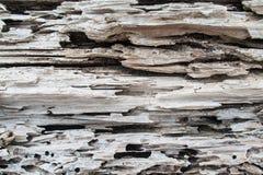 烂掉结构树分解的纹理对比 免版税库存照片
