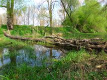 烂掉结构树在乡下 免版税库存图片