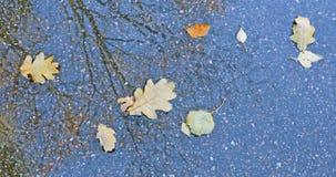 烘干一棵半裸体的树的叶子和反射在水中 库存图片