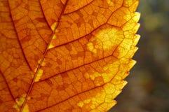 烘干分割的叶子 库存照片