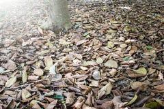 烘干叶子在树下 库存图片