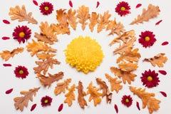 烘干叶子以与一个黄色花中心的一个圈子的形式 图库摄影