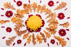 烘干叶子以与红色和黄色花的一个圈子的形式 图库摄影
