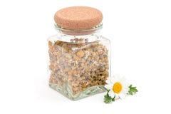 烘干在一个瓶子的草本甘菊茶有在白色隔绝的新鲜的春黄菊花的 免版税库存照片