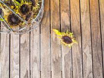 烘干在一张木桌上的向日葵外面 库存图片