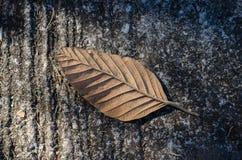 烘干在地板上落的叶子 图库摄影