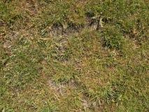 烘干在坚硬干燥黏土,自然本底的被烧的死的草 干燥棕色绿色地毯 免版税库存照片