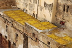 烘干在太阳我的黄色皮革皮革厂在菲斯 库存图片