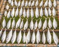 烘干在太阳鱼在小村庄在泰国 库存图片