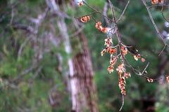 烘干在树的叶子 免版税库存照片
