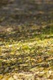 烘干在森林土路下落的叶子-打火机 图库摄影