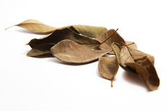 烘干在白色背景的叶子 免版税库存照片