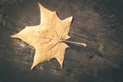 烘干在老木板条-葡萄酒影片作用的叶子 库存图片
