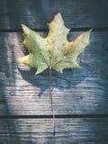 烘干在老木板条-葡萄酒影片作用的叶子 免版税库存图片