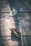 烘干在老木板条-葡萄酒影片作用的叶子 免版税图库摄影