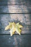 烘干在老木板条-葡萄酒影片作用的叶子 图库摄影