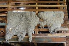 烘干在谷仓的羊皮种田庄园Harberton 图库摄影