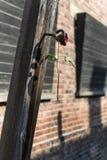 烘干在集中营的一根杆上升了在奥斯威辛,波兰 库存图片