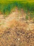 烘干在麦田的角落的破裂的黏土 多灰尘的深镇压和枯萎的花 免版税库存照片