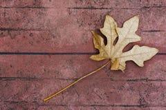 烘干在水泥地板上的叶子 免版税库存图片