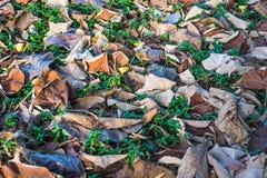 烘干在绿色草坪的叶子 免版税图库摄影