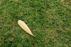 烘干在绿色草坪的叶子 库存图片
