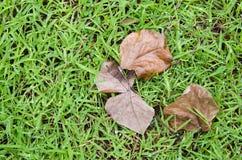 烘干在绿色领域的叶子 库存照片