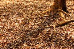 烘干属于在地面上的叶子树 图库摄影