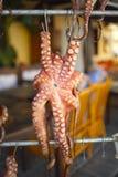 烘干希腊章鱼的克利特 库存图片