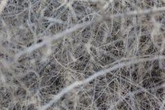 烘干散开的枝杈灌木 免版税图库摄影
