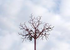 烘干枯萎的装饰莓果或草本枝杈 库存照片