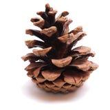 烘干查出的老pinecone 库存图片