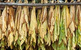 烘干烟草古典方式在谷仓 免版税库存图片