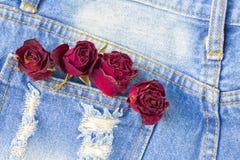 烘干玫瑰色在后面口袋斜纹布有copyspace背景 库存图片