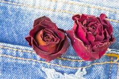 烘干玫瑰色在后面口袋斜纹布有copyspace背景 免版税库存图片