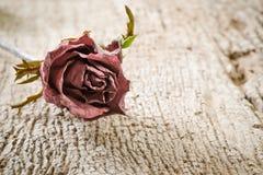 烘干玫瑰色在木背景 免版税库存照片