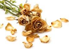 烘干玫瑰色花 库存照片