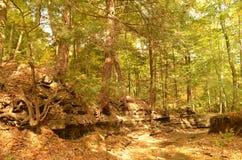 烘干用下落的叶子盖的小湾河床 库存照片