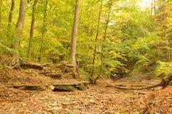 烘干用下落的叶子盖的小湾河床 免版税库存照片