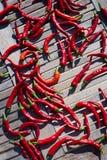 烘干的红辣椒在阳光下,西班牙 图库摄影