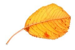 烘干秋天叶子黄色 库存照片