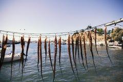 烘干章鱼腿在阳光下 免版税库存图片