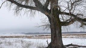 烘干草沼泽冬天芦苇美好的冷的自然风景 免版税库存图片