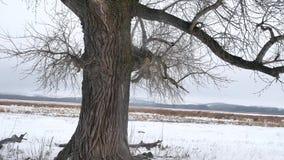 烘干草沼泽冬天芦苇美好的自然寒冷风景 免版税库存图片