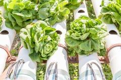 烘干菜在从burnin的室外水耕的庭院农场 库存图片