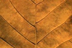 烘干被构造的叶子 免版税库存图片