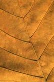 烘干被构造的叶子 库存照片