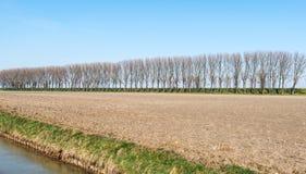 光秃的树行在堤堰的 库存图片