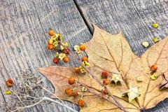烘干野生植物、坚果和干枫叶在木背景 免版税库存图片